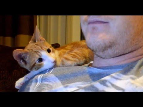 Kitten Loves His Human
