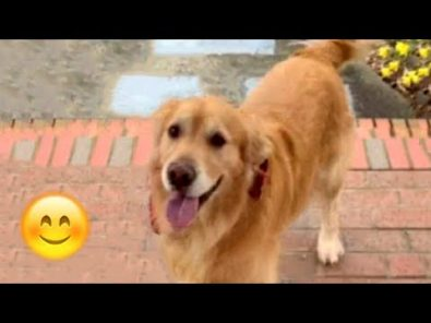 dogs-happy-when-their-humans-come-home