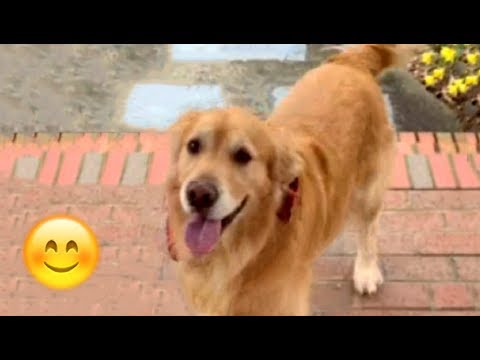 Dogs Happy When Their Humans Come Home