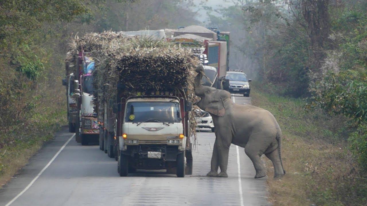 Even Elephants Enjoy A Sugary Treat 🐘🍬
