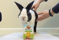 rabbit-tries-a-juice-box-%f0%9f%90%87