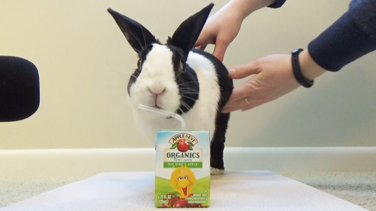 Rabbit Tries A Juice Box