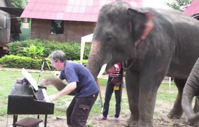 animals-enjoying-musical-performances