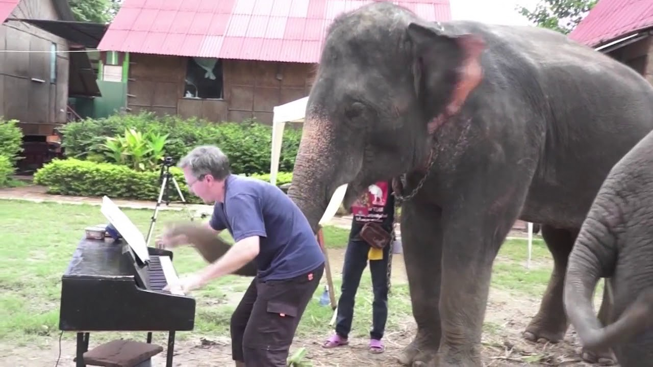 Animals Enjoying Musical Performances