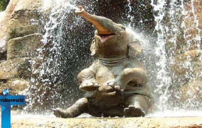 top-20-cute-and-funny-baby-elephant-video-clips