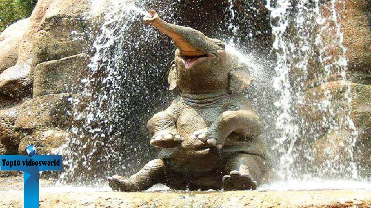 Top 20 Cute And Funny Baby Elephant Video Clips