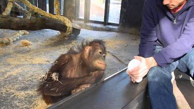 enjoy-the-monkeys-reaction-to-a-magic-trick
