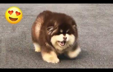 even-more-happy-bouncing-puppies