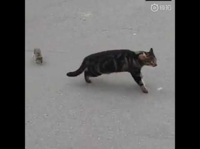 cat-meets-his-match