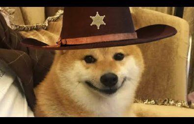 howdy-doggies
