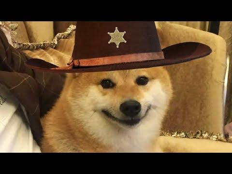 Howdy Doggies!