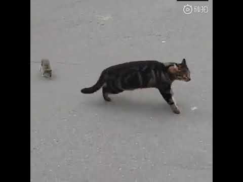 Cat Meets His Match