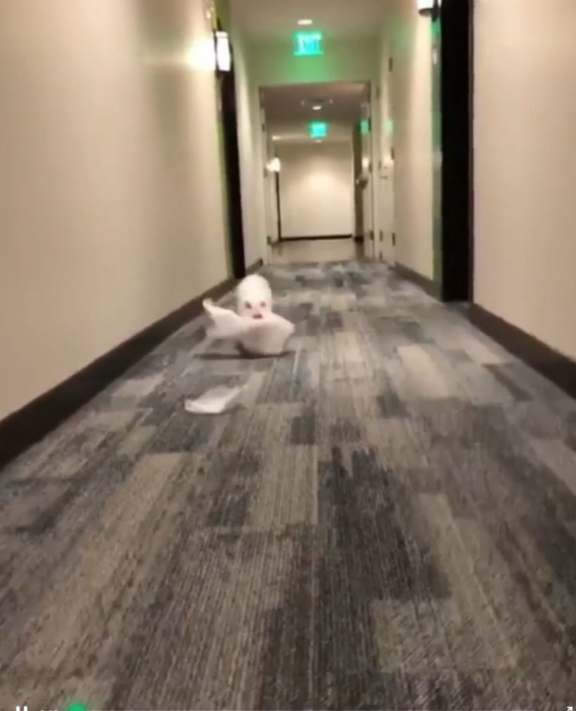 pig-finds-some-tissue-paper-and-much-fun-ensues