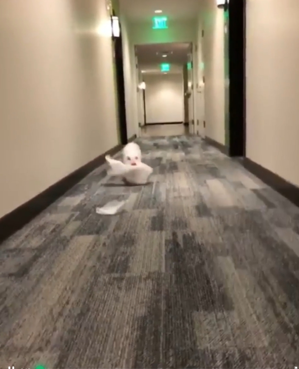 Pig Finds Some Tissue Paper And Much Fun Ensues