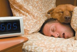 funny-videos-of-dogs-sleeping-with-their-humans