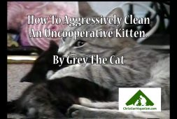 how-a-mother-cat-aggressively-cleans-an-uncooperative-kitten