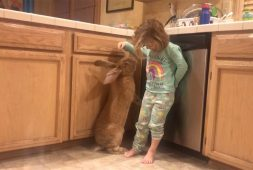 toddler-and-giant-rabbit-best-friends-for-life
