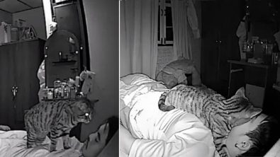 man-sets-up-camera-to-see-what-his-cat-does-at-night