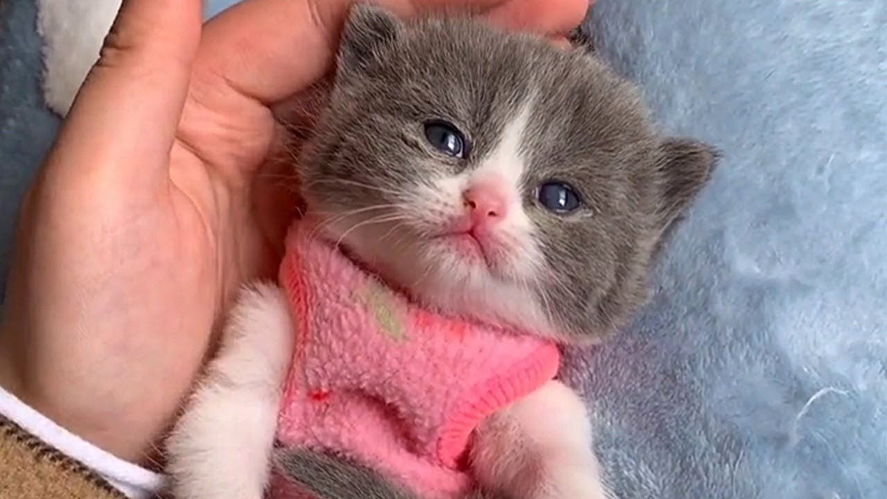 Tiny Kitten Is Too Adorable For Words