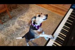 dog-sings-and-plays-the-piano