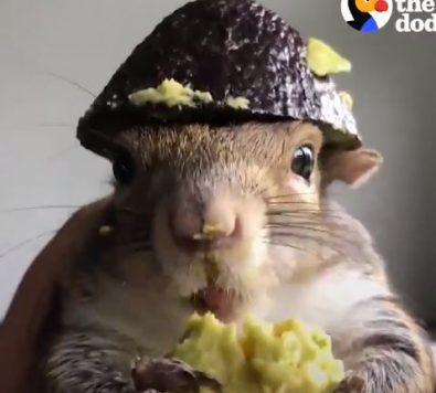 sergeant-squirrel-reporting-for-duty