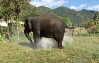 elephant-converts-their-own-sprinkler-into-a-fountain