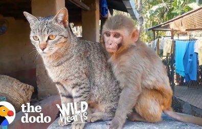 monkey-and-cat-are-best-friends