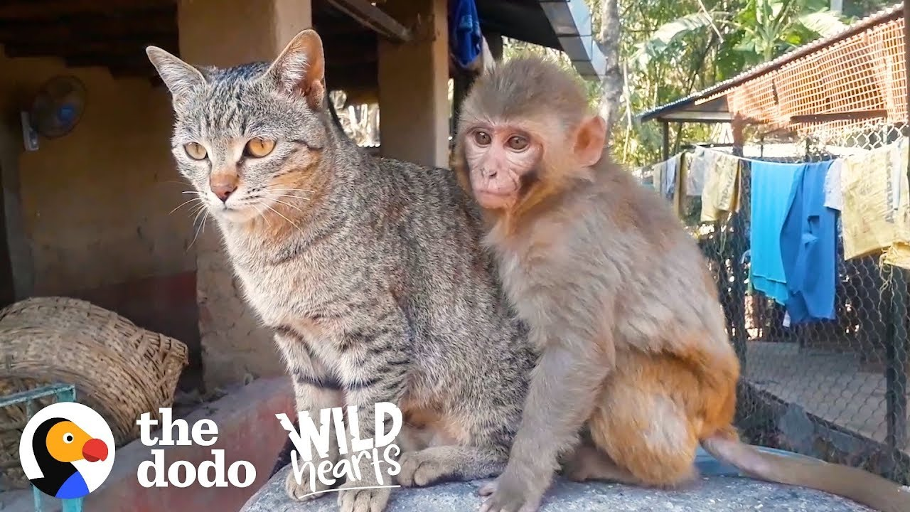 Monkey And Cat Are Best Friends