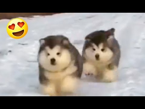 Walking Balls Of Fluff