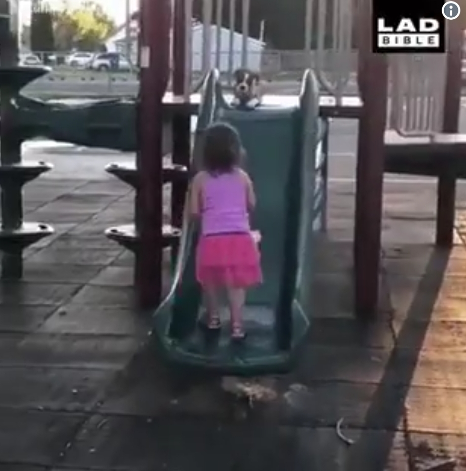 Girl Teaches Her Puppy How To Slide