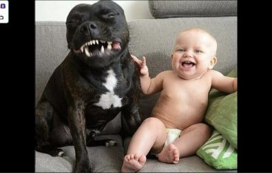 these-puppies-and-babies-are-best-friends-for-life