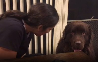 dog-asks-for-a-hug-and-then-sneak-eats-his-humans-food