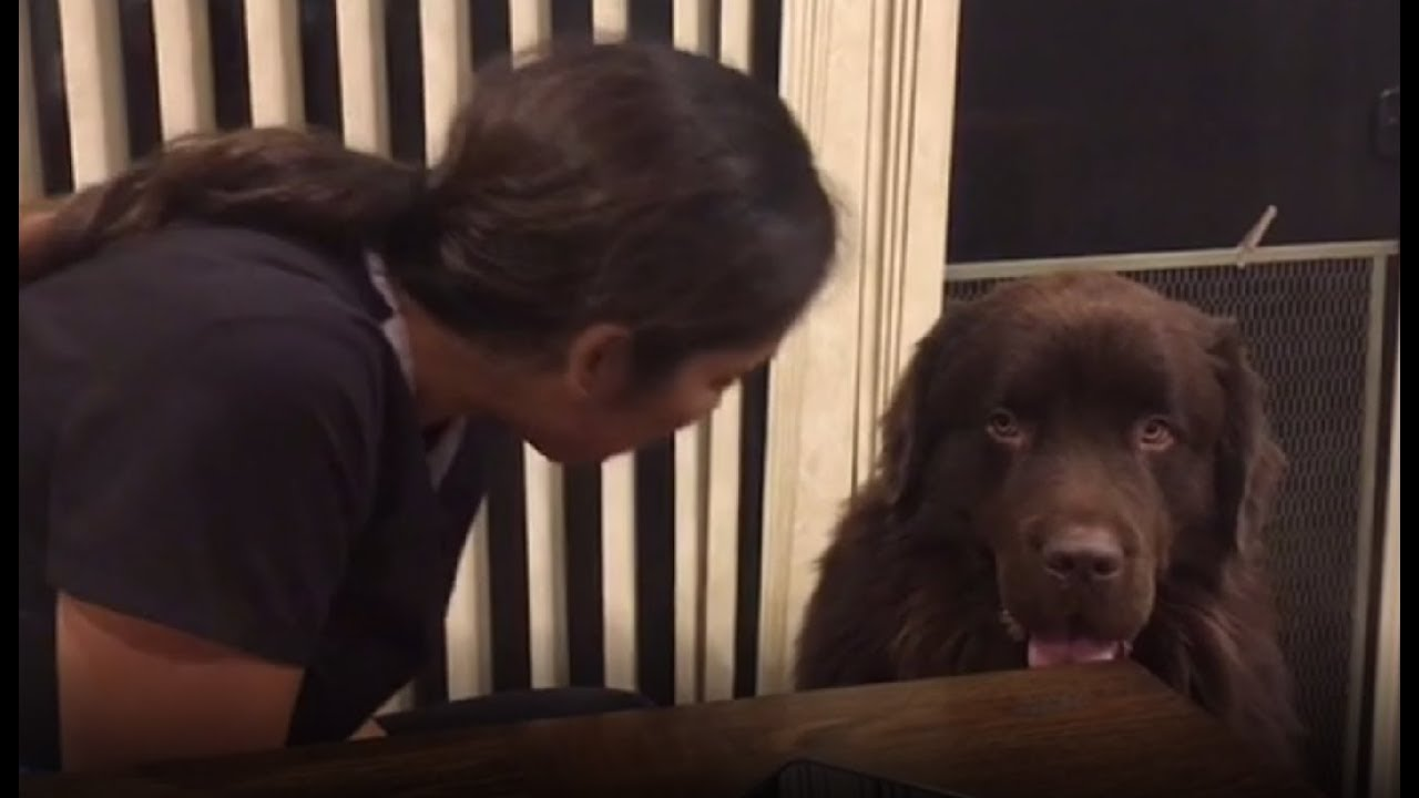 Dog Asks For A Hug And Then Sneak Eats His Human's Food