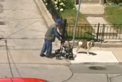 dog-patiently-waits-for-his-elderly-friend-using-a-walker