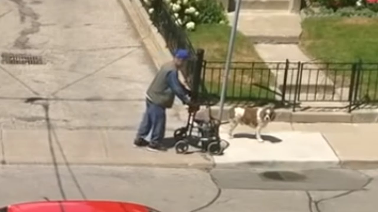 Dog Patiently Waits For His Elderly Friend Using A Walker