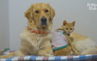 cat-and-dog-are-the-cutest-best-friends-ever