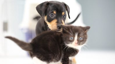 kittens-meet-puppies-for-the-first-time