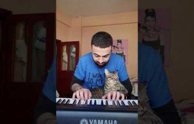 cat-loves-music-%f0%9f%98%bb%f0%9f%8e%b9