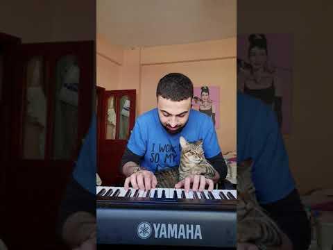Cat loves music 😻🎹