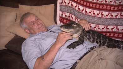 wally-the-alligator-loves-humans-and-just-wants-to-cuddle