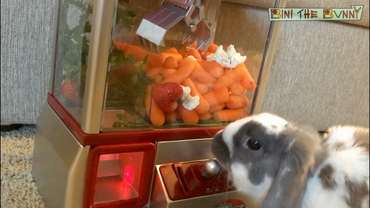 Bunny Wins Snacks From Miniature Claw Arcade Game