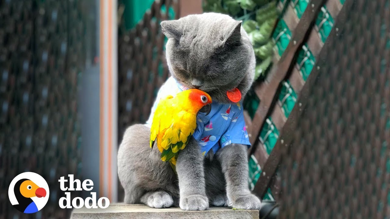 Cat And Parrot Are Best Friends