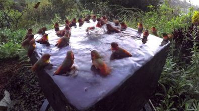 the-littlest-pool-party