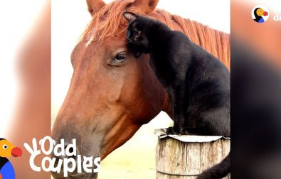 cat-rides-his-horse-best-friend-every-day