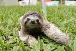 what-it-is-like-to-be-chased-bu-a-sloth