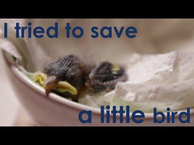 meet-pete-the-little-bird