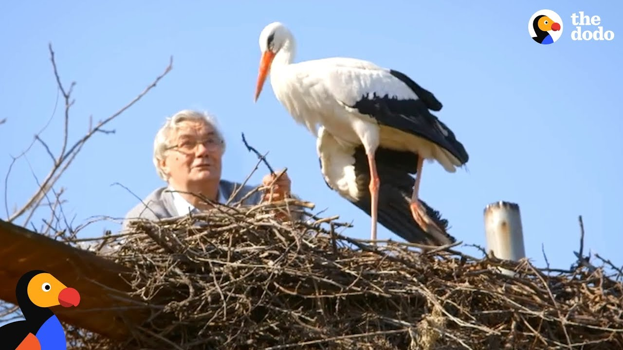 Man Rescues Stork And Gives Her A Great Life