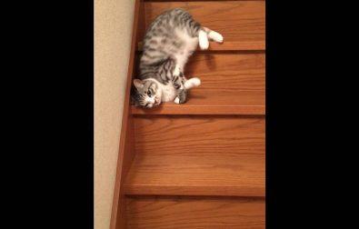 is-it-a-cat-or-a-slinky
