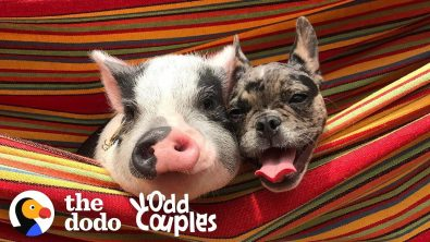 dog-and-pig-are-best-friends