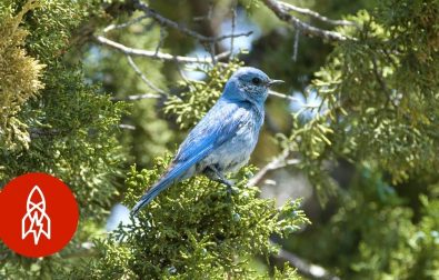 birdman-has-helped-over-40000-birds